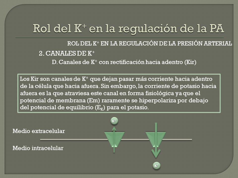 2. CANALES DE K + ROL DEL K + EN LA REGULACIÓN DE LA PRESIÓN ARTERIAL D. Canales de K + con rectificación hacia adentro (Kir) Los Kir son canales de K
