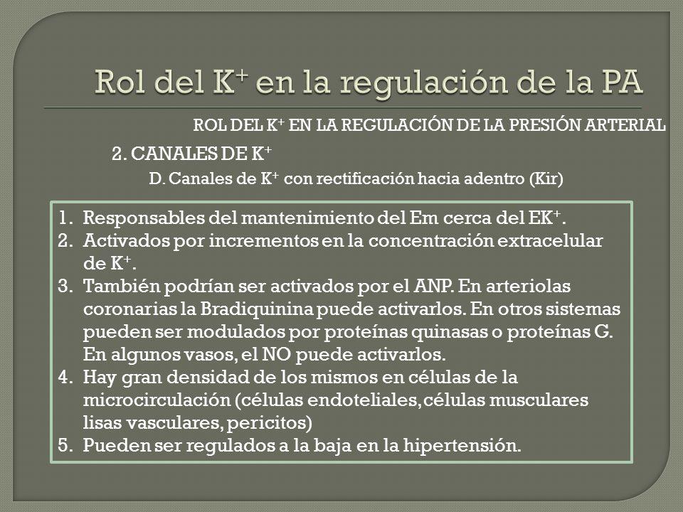 2. CANALES DE K + ROL DEL K + EN LA REGULACIÓN DE LA PRESIÓN ARTERIAL D. Canales de K + con rectificación hacia adentro (Kir) 1.Responsables del mante