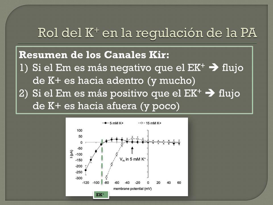 Resumen de los Canales Kir: 1)Si el Em es más negativo que el EK + flujo de K+ es hacia adentro (y mucho) 2)Si el Em es más positivo que el EK + flujo
