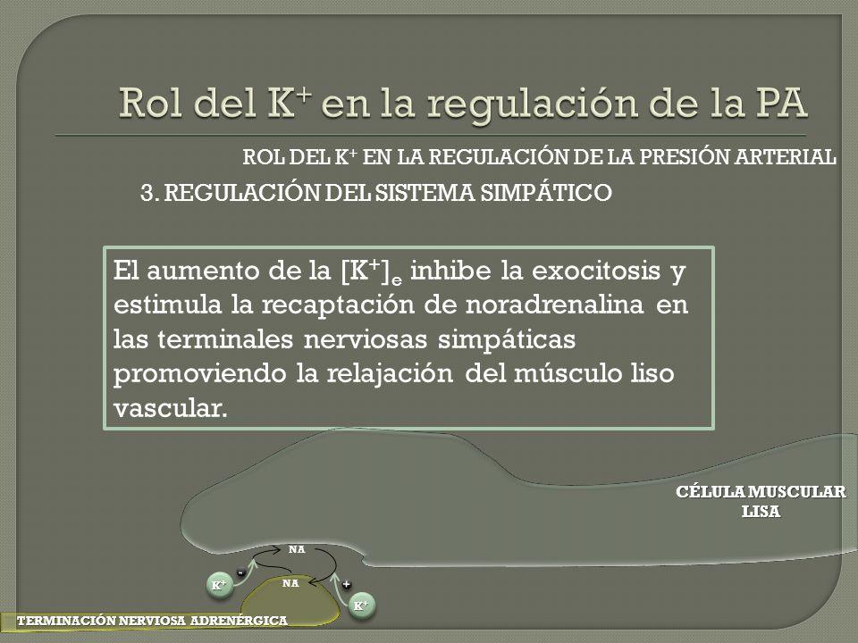 ROL DEL K + EN LA REGULACIÓN DE LA PRESIÓN ARTERIAL El aumento de la [K + ] e inhibe la exocitosis y estimula la recaptación de noradrenalina en las t