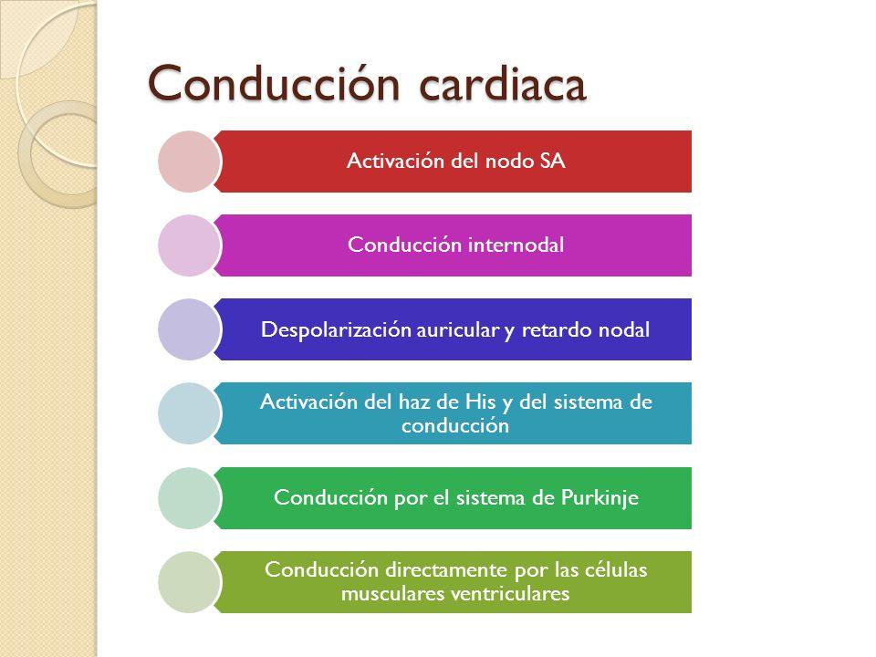 Conducción cardiaca Activación del nodo SA Conducción internodal Despolarización auricular y retardo nodal Activación del haz de His y del sistema de