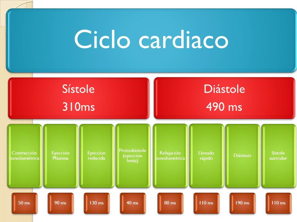 Ciclo cardiaco Sístole 310ms Contracción isovolumétrica 50 ms Eyección Máxima 90 ms Eyección reducida 130 ms Protodiástole (eyección lenta) 40 ms Diás