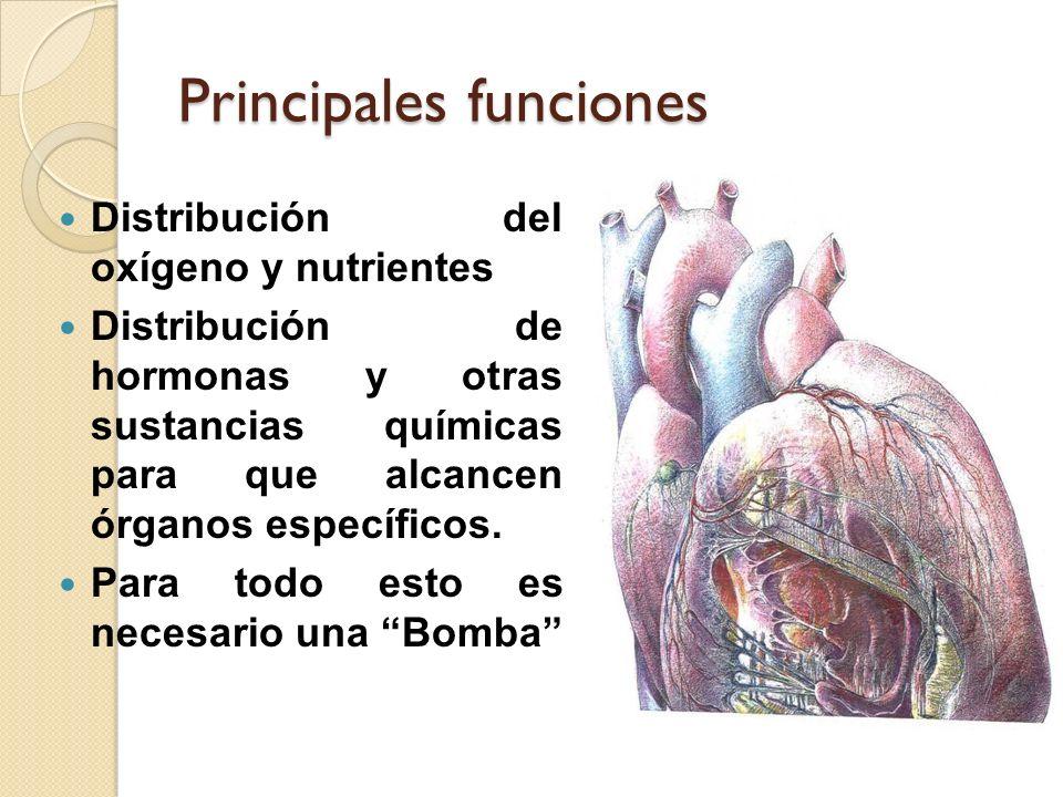 Principales funciones Distribución del oxígeno y nutrientes Distribución de hormonas y otras sustancias químicas para que alcancen órganos específicos