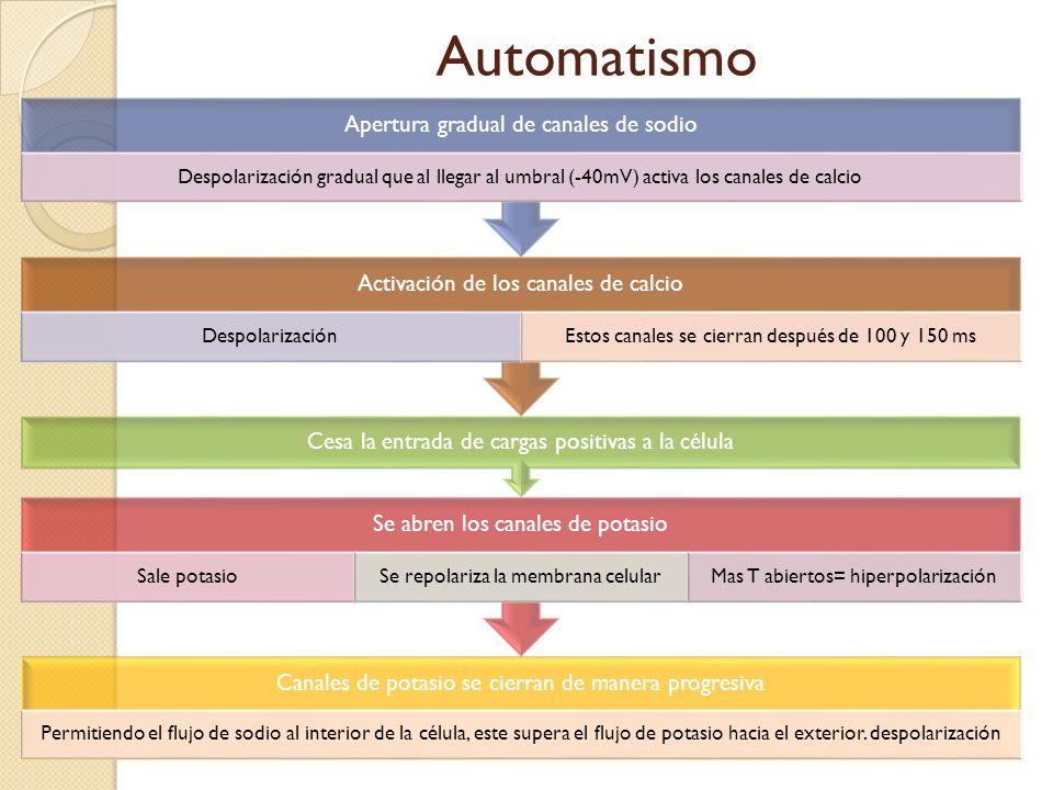 Automatismo Canales de potasio se cierran de manera progresiva Permitiendo el flujo de sodio al interior de la célula, este supera el flujo de potasio