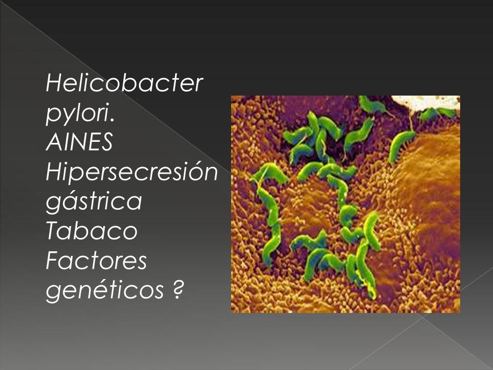 Helicobacter pylori. AINES Hipersecresión gástrica Tabaco Factores genéticos ?