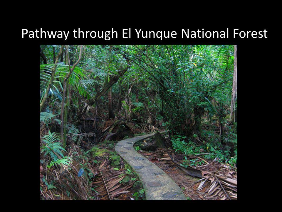 El Yunque-Rain Forest