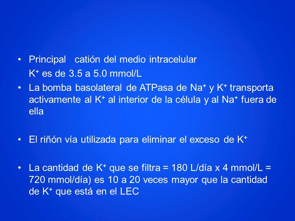 Principal catión del medio intracelular K + es de 3.5 a 5.0 mmol/L La bomba basolateral de ATPasa de Na + y K + transporta activamente al K + al inter