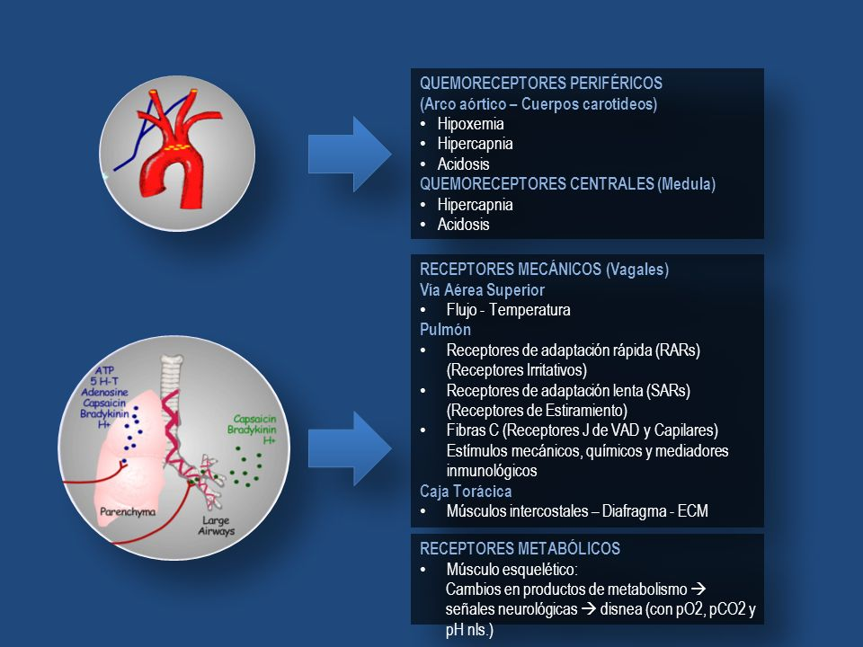 QUEMORECEPTORES PERIFÉRICOS (Arco aórtico – Cuerpos carotideos) Hipoxemia Hipercapnia Acidosis QUEMORECEPTORES CENTRALES (Medula) Hipercapnia Acidosis