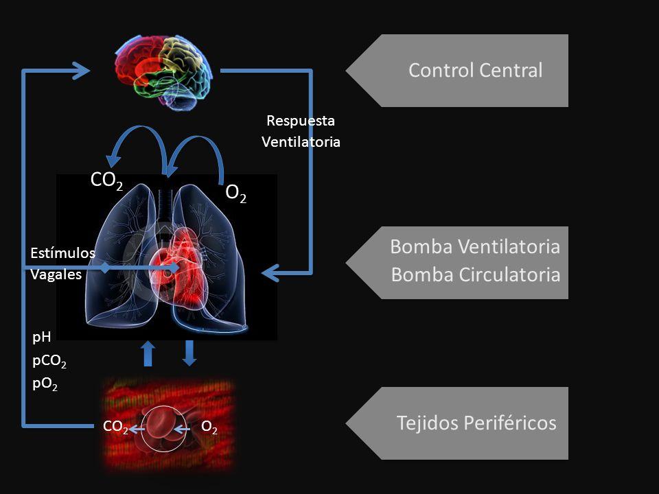 Control Central Bomba Ventilatoria Bomba Circulatoria Tejidos Periféricos O2O2 CO 2 O2O2 pH pCO 2 pO 2 Estímulos Vagales Respuesta Ventilatoria