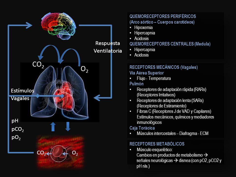 O2O2 CO 2 O2O2 pH pCO 2 pO 2 Estímulos Vagales Respuesta Ventilatoria QUEMORECEPTORES PERIFÉRICOS (Arco aórtico – Cuerpos carotideos) Hipoxemia Hiperc