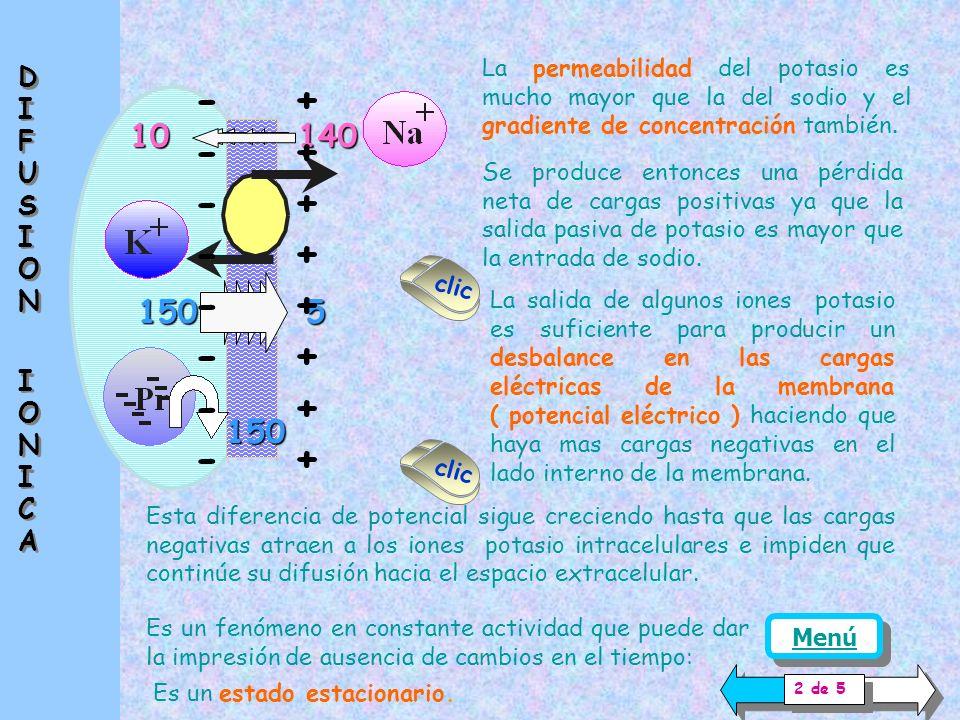 Hay numerosos fenómenos asociados, entre los que se halla la difusión de iones a través de la membrana.