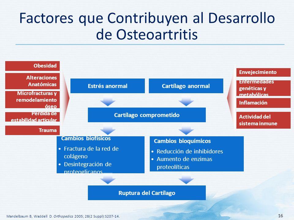 16 Factores que Contribuyen al Desarrollo de Osteoartritis Obesidad Alteraciones Anatómicas Microfracturas y remodelamiento óseo Pérdida de estabilidad articular Trauma Envejecimiento Enfermedades genéticas y metabólicas Inflamación Actividad del sistema inmune Cartílago comprometido Estrés anormalCartílago anormal Mandelbaum B, Waddell D.