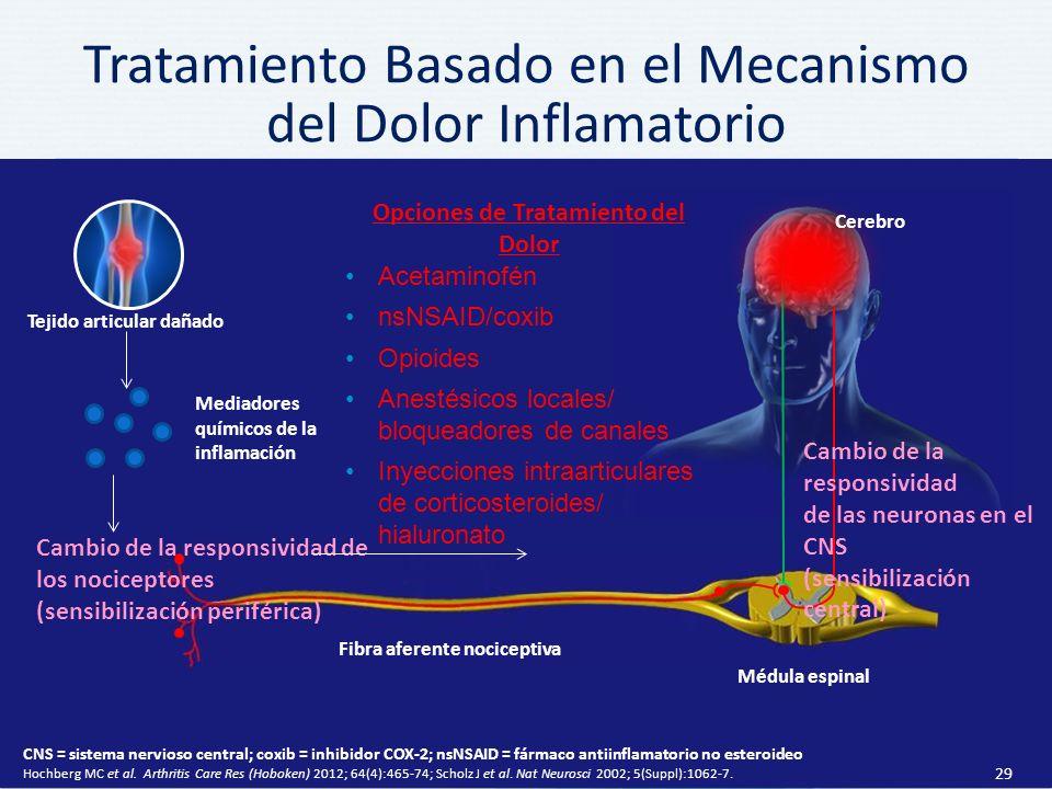 Tratamiento Basado en el Mecanismo del Dolor Inflamatorio 29 Fibra aferente nociceptiva Médula espinal Cambio de la responsividad de los nociceptores (sensibilización periférica) Cerebro Mediadores químicos de la inflamación Cambio de la responsividad de las neuronas en el CNS (sensibilización central) CNS = sistema nervioso central; coxib = inhibidor COX-2; nsNSAID = fármaco antiinflamatorio no esteroideo Hochberg MC et al.