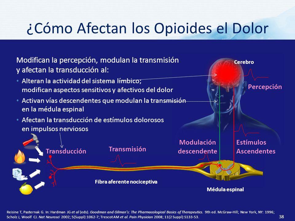 Fibra aferente nociceptiva Modulación descendente Estímulos Ascendentes Médula espinal Transducción Transmisión Cerebro Percepción ¿Cómo Afectan los Opioides el Dolor Modifican la percepción, modulan la transmisión y afectan la transducción al: Alteran la actividad del sistema límbico; modifican aspectos sensitivos y afectivos del dolor Activan vías descendentes que modulan la transmisión en la médula espinal Afectan la transducción de estímulos dolorosos en impulsos nerviosos Reisine T, Pasternak G.