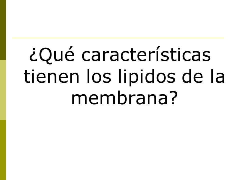 ¿Qué características tienen los lipidos de la membrana?