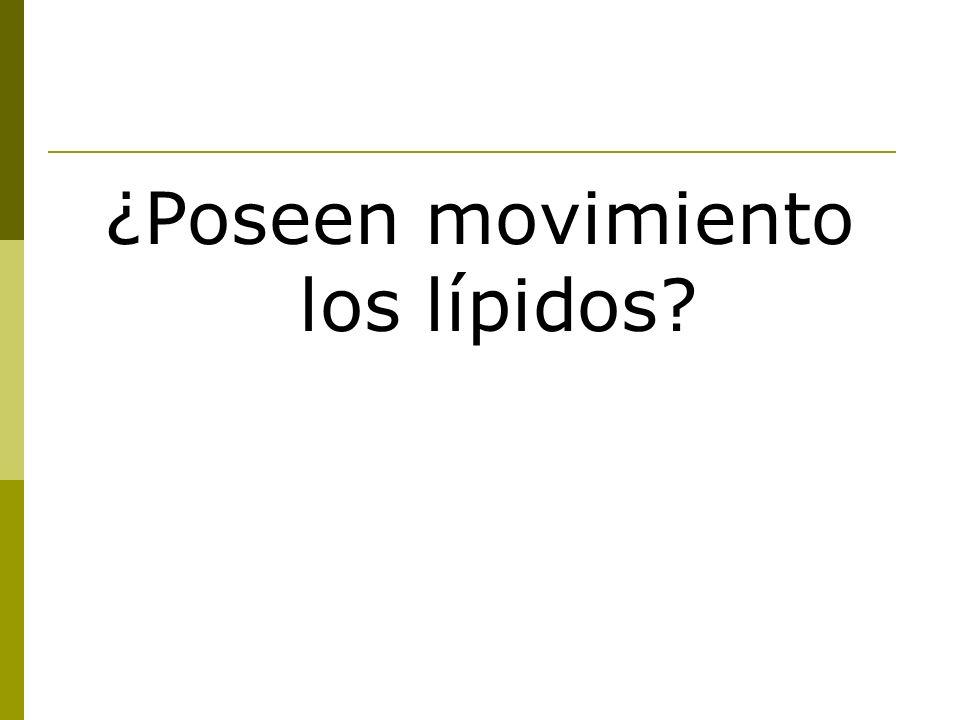¿Poseen movimiento los lípidos?