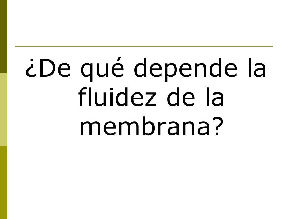 ¿De qué depende la fluidez de la membrana?