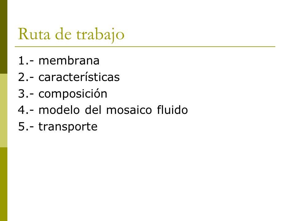 Ruta de trabajo 1.- membrana 2.- características 3.- composición 4.- modelo del mosaico fluido 5.- transporte