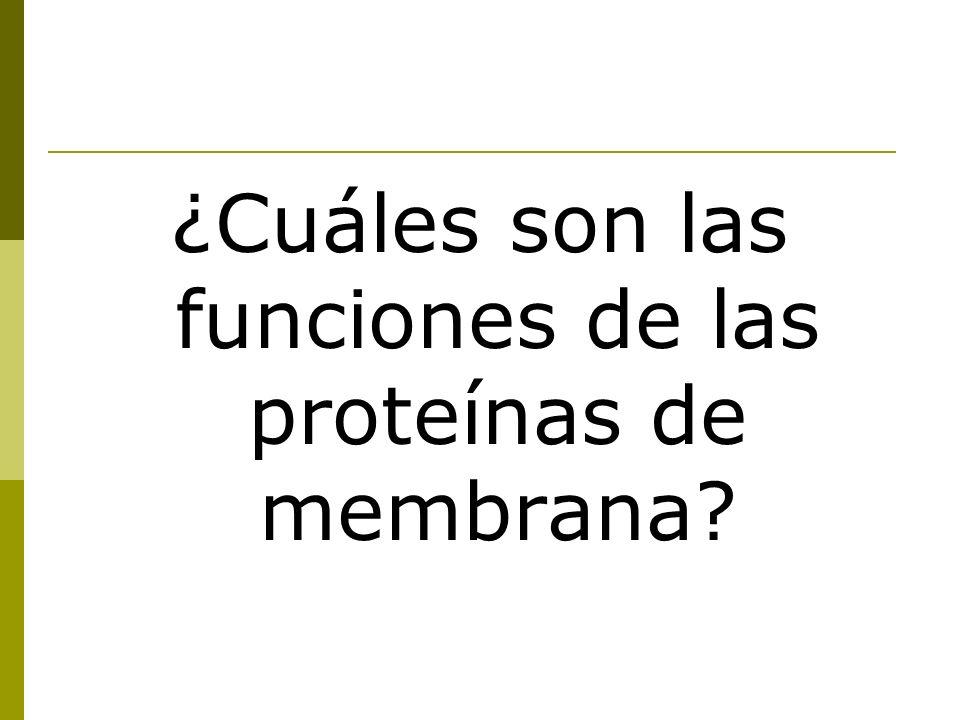¿Cuáles son las funciones de las proteínas de membrana?