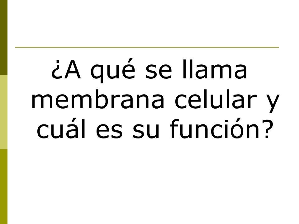 ¿A qué se llama membrana celular y cuál es su función?