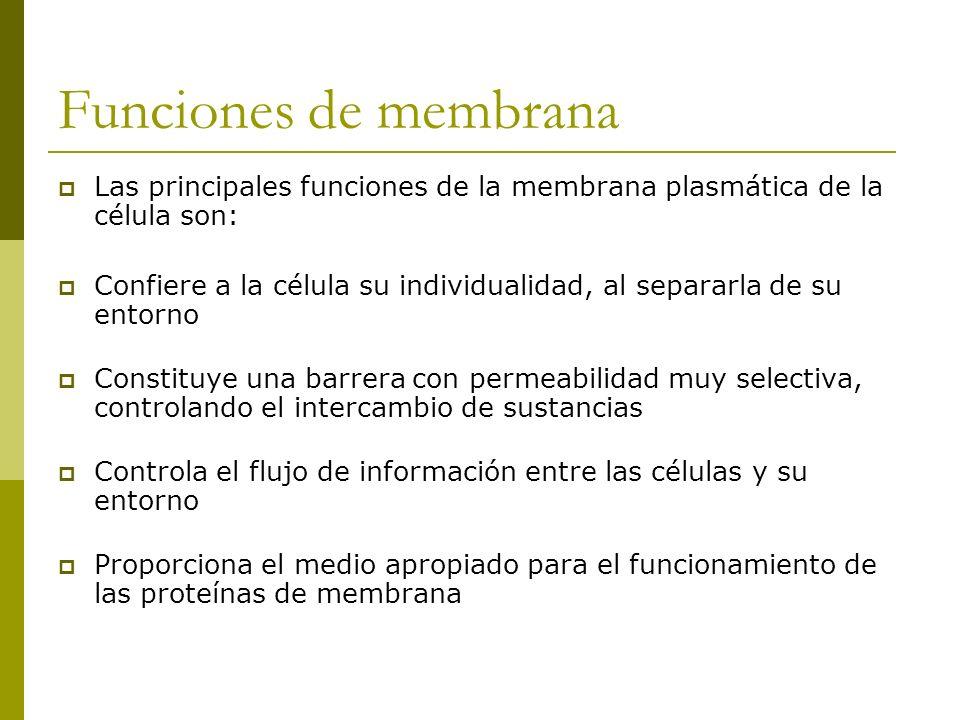 Funciones de membrana Las principales funciones de la membrana plasmática de la célula son: Confiere a la célula su individualidad, al separarla de su