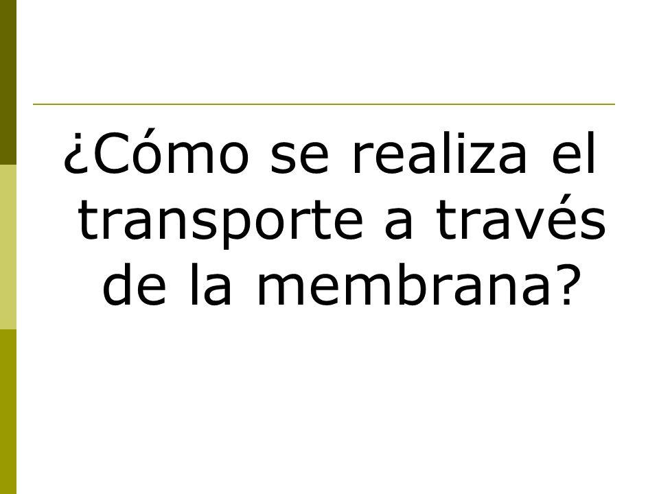 ¿Cómo se realiza el transporte a través de la membrana?
