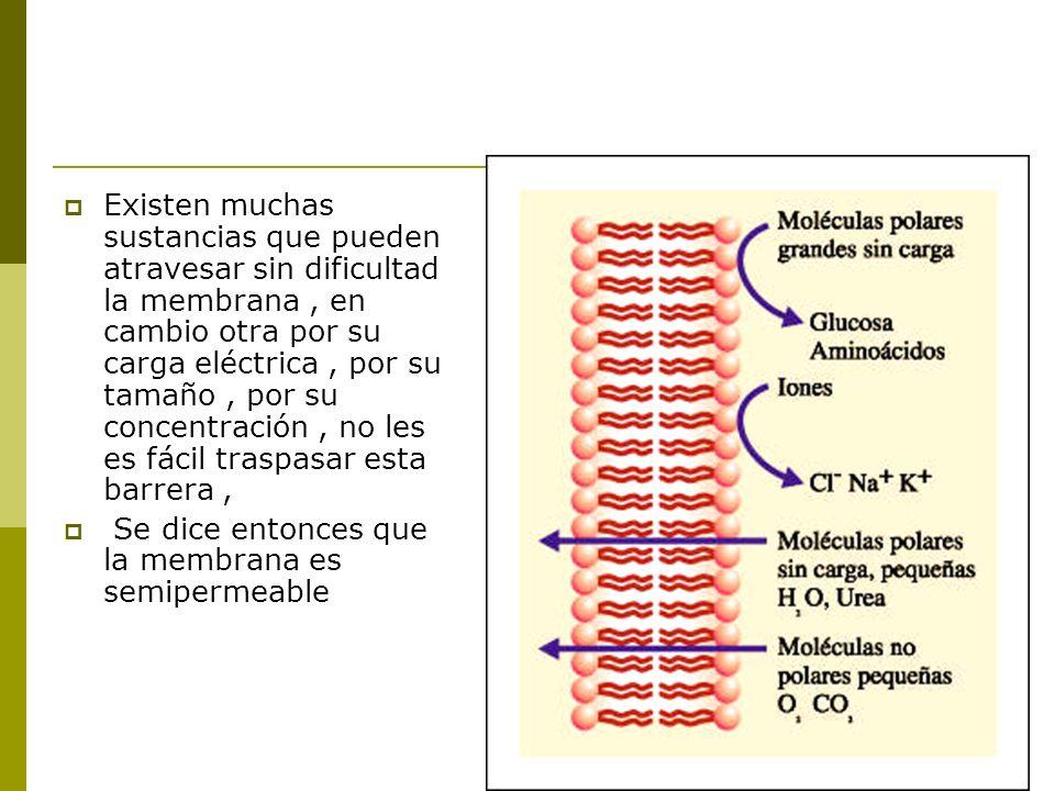 Existen muchas sustancias que pueden atravesar sin dificultad la membrana, en cambio otra por su carga eléctrica, por su tamaño, por su concentración, no les es fácil traspasar esta barrera, Se dice entonces que la membrana es semipermeable