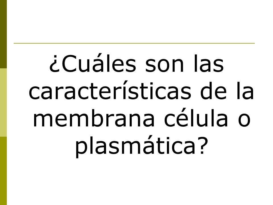 ¿Cuáles son las características de la membrana célula o plasmática?