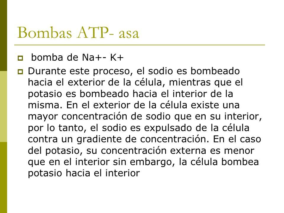 Bombas ATP- asa bomba de Na+- K+ Durante este proceso, el sodio es bombeado hacia el exterior de la célula, mientras que el potasio es bombeado hacia el interior de la misma.