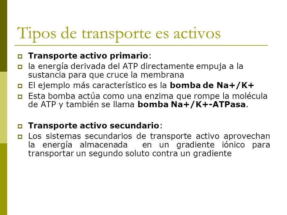 Tipos de transporte es activos Transporte activo primario: la energía derivada del ATP directamente empuja a la sustancia para que cruce la membrana El ejemplo más característico es la bomba de Na+/K+ Esta bomba actúa como una enzima que rompe la molécula de ATP y también se llama bomba Na+/K+-ATPasa.