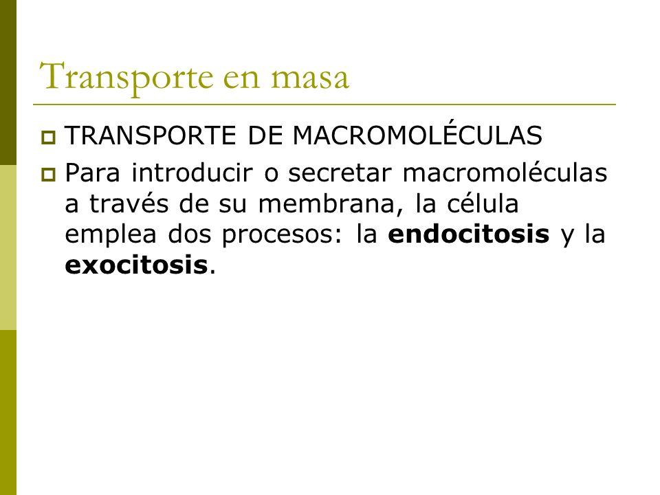 Transporte en masa TRANSPORTE DE MACROMOLÉCULAS Para introducir o secretar macromoléculas a través de su membrana, la célula emplea dos procesos: la endocitosis y la exocitosis.