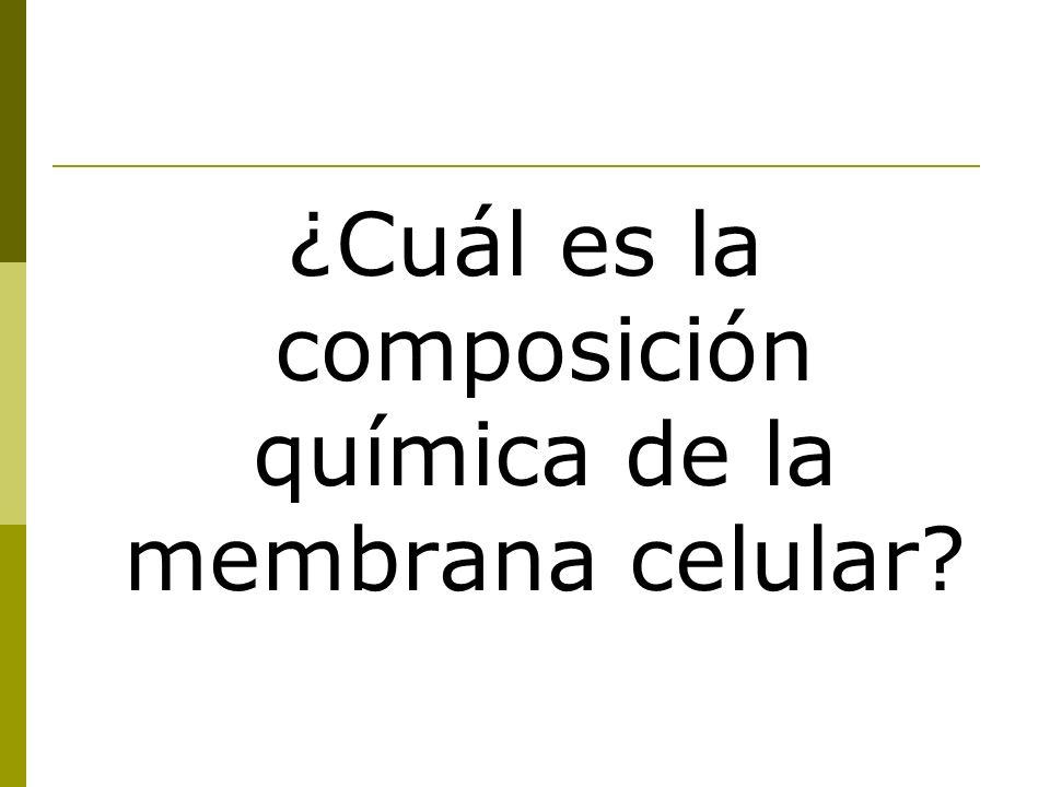 ¿Cuál es la composición química de la membrana celular?