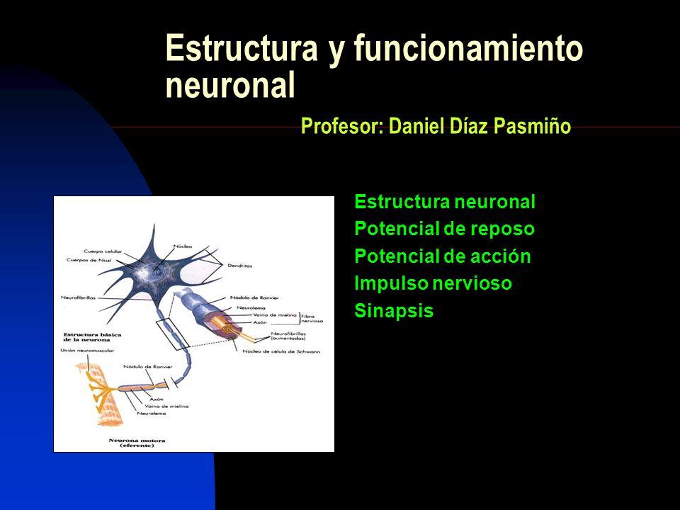 Estructura y funcionamiento neuronal Profesor: Daniel Díaz Pasmiño Estructura neuronal Potencial de reposo Potencial de acción Impulso nervioso Sinaps