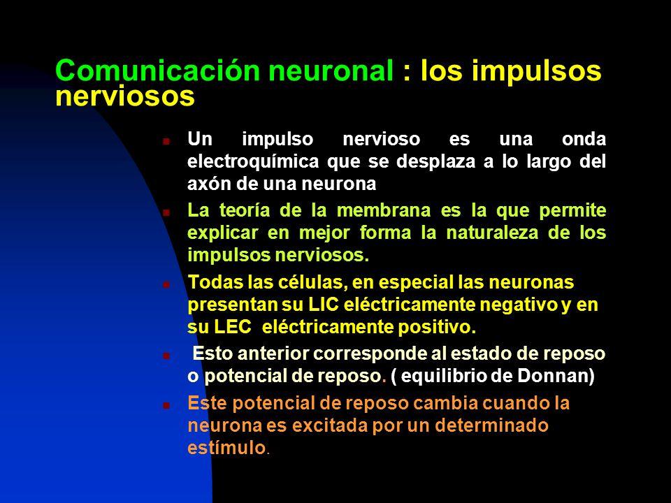 Comunicación neuronal : los impulsos nerviosos Un impulso nervioso es una onda electroquímica que se desplaza a lo largo del axón de una neurona La te