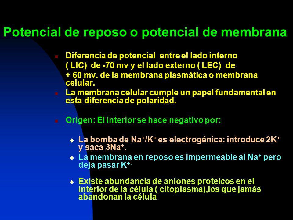 Potencial de reposo o potencial de membrana Diferencia de potencial entre el lado interno ( LIC) de -70 mv y el lado externo ( LEC) de + 60 mv. de la