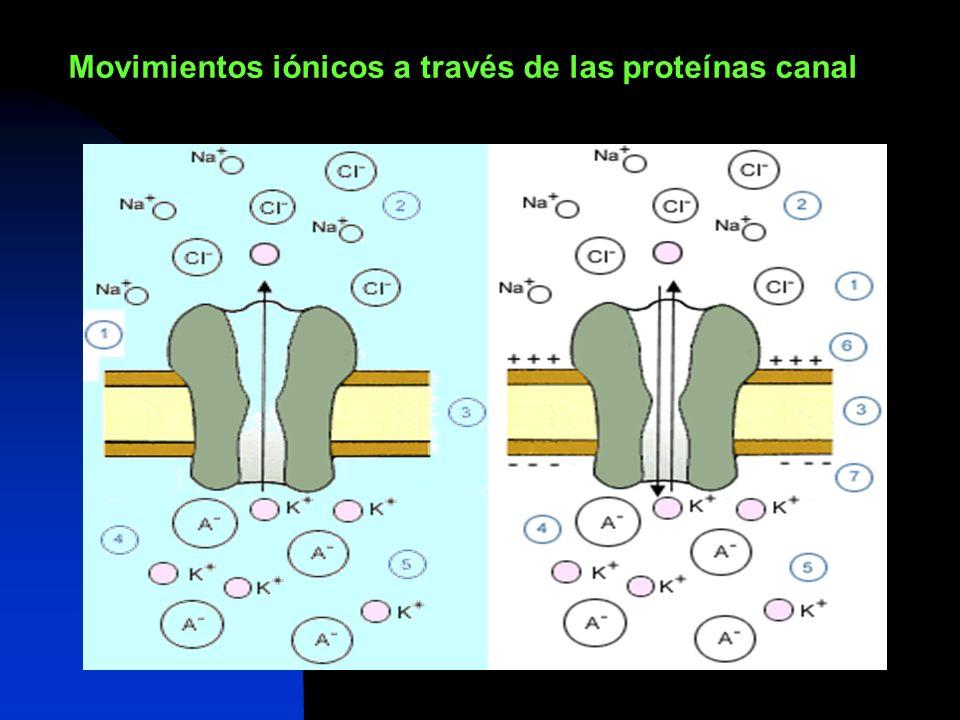 Movimientos iónicos a través de las proteínas canal