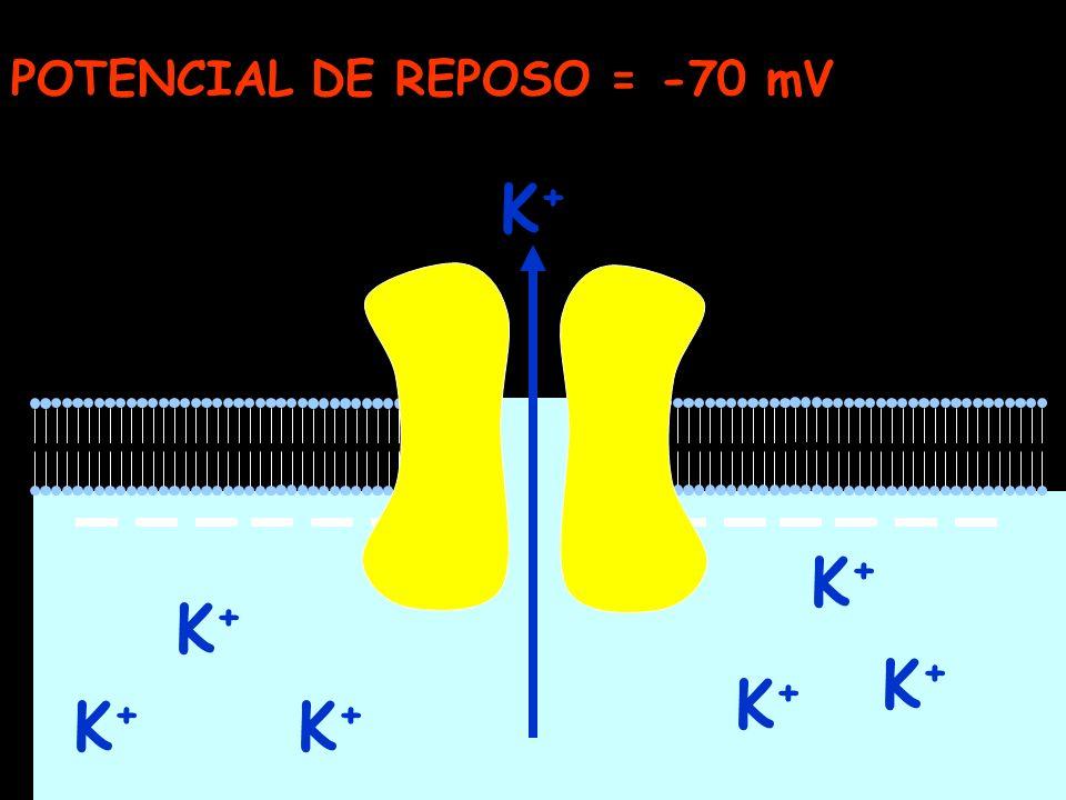 K+K+ K+K+ K+K+ K+K+ K+K+ K+K+ K+K+