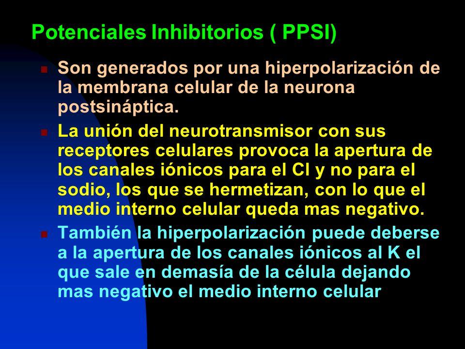 Potenciales Inhibitorios ( PPSI) Son generados por una hiperpolarización de la membrana celular de la neurona postsináptica. La unión del neurotransmi