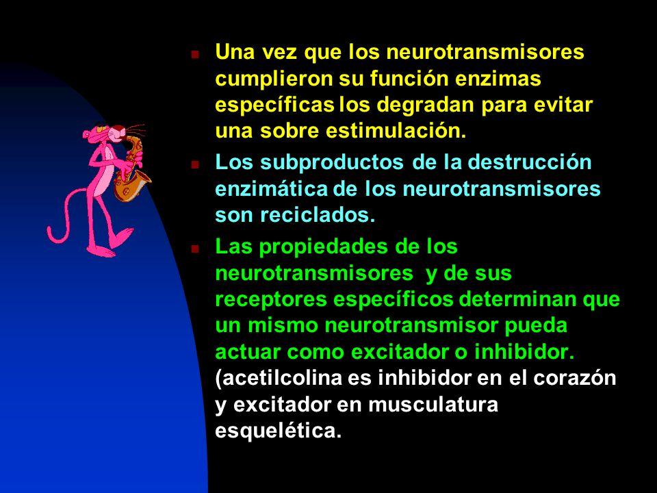 Una vez que los neurotransmisores cumplieron su función enzimas específicas los degradan para evitar una sobre estimulación. Los subproductos de la de