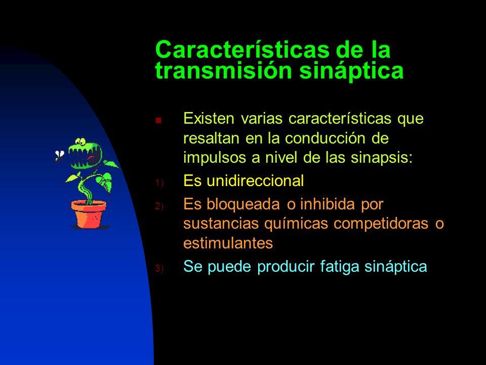 Características de la transmisión sináptica Existen varias características que resaltan en la conducción de impulsos a nivel de las sinapsis: 1) Es un