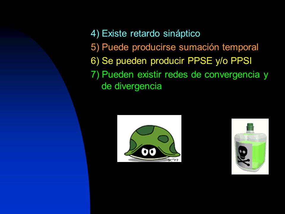 4) Existe retardo sináptico 5) Puede producirse sumación temporal 6) Se pueden producir PPSE y/o PPSI 7) Pueden existir redes de convergencia y de div