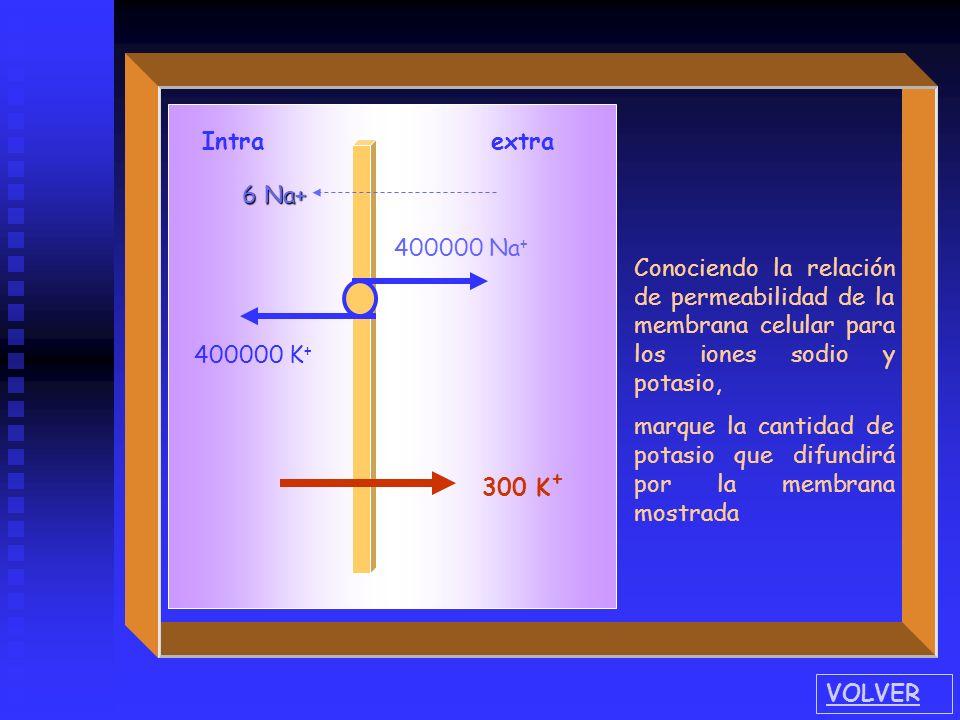 Intra extra 400000 Na + 400000 K + 6 Na+ VOLVER Conociendo la relación de permeabilidad de la membrana celular para los iones sodio y potasio, marque