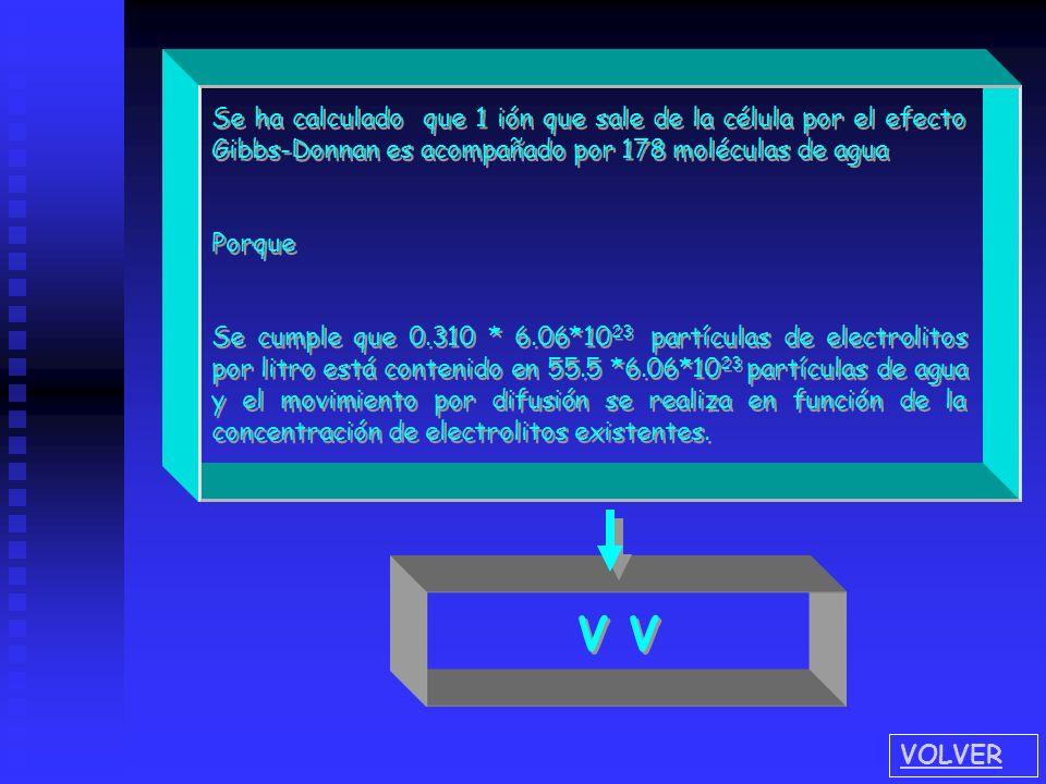 Se ha calculado que 1 ión que sale de la célula por el efecto Gibbs-Donnan es acompañado por 178 moléculas de agua Porque Se cumple que 0.310 * 6.06*1
