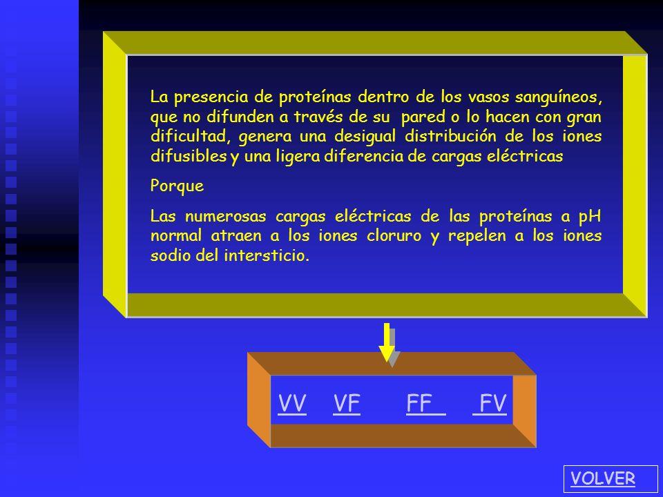 Elija el distractor correcto para comparar las concentraciones del plasma con respecto al líquido intersticial 1.- 1.- la concentración de las proteín