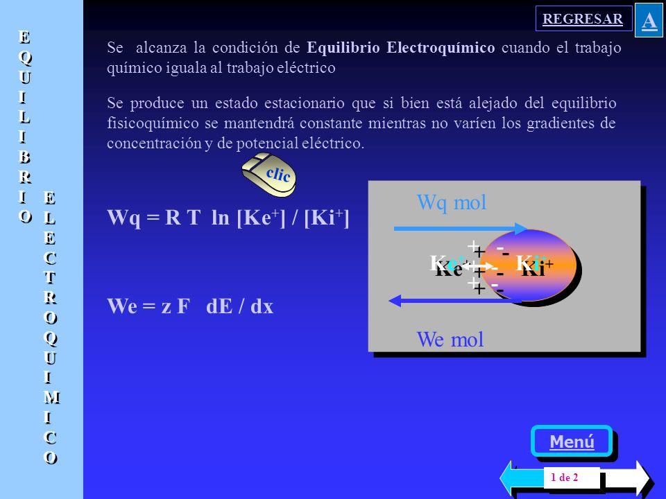 De la interacción de todas las fuerzas descritas se logra un estado estacionario, diferente. al equilibrio fisicoquímico, pero que se mantiene estable