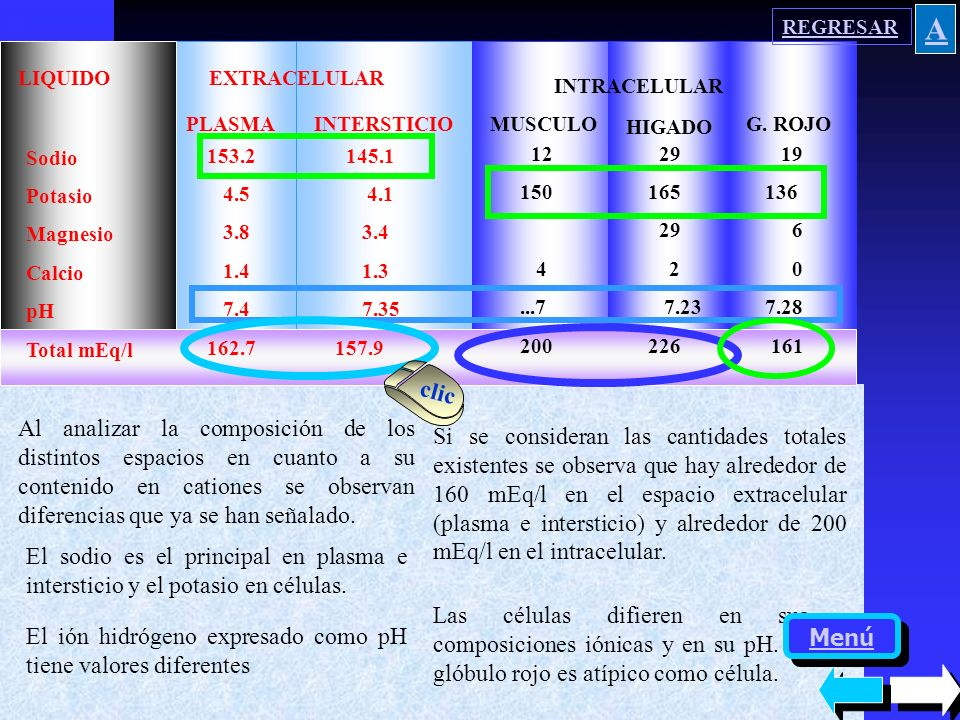 LIQUIDO EXTRACELULAR INTRACELULAR INTERSTICIOMUSCULO HIGADO G. ROJO PLASMA Sodio Potasio Magnesio Calcio pH Total mEq/l 153.2 145.1 4.5 4.1 3.8 3.4 1.