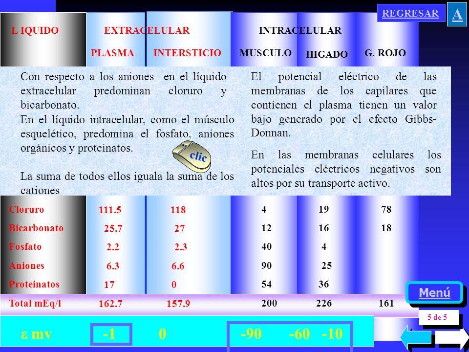 LIQUIDO EXTRACELULAR INTRACELULAR INTERSTICIOMUSCULO HIGADO G. ROJOPLASMA Cloruro Bicarbonato Fosfato Aniones Proteinatos Total mEq/l 111.5 118 25.7 2