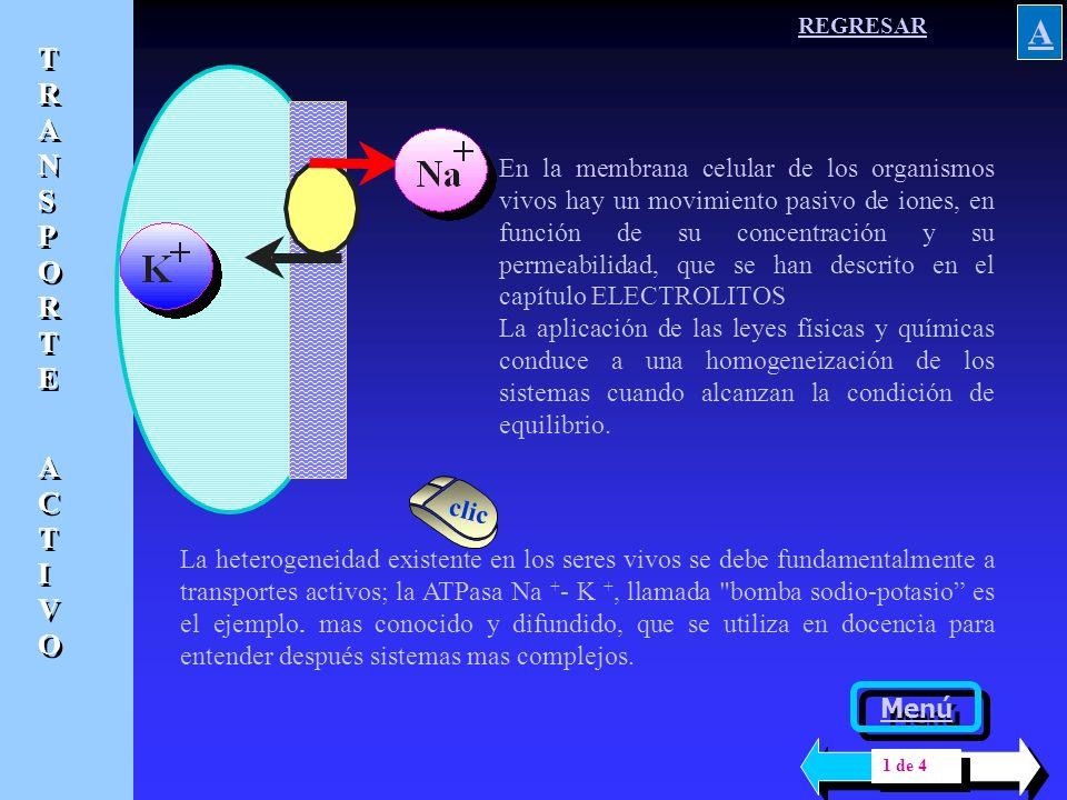 V V V Si la permeabilidad del potasio es 50 veces mayor que la del sodio, una membrana celular que permite entrar por difusión 4 iones sodio permitirá la salida por difusión de 200 iones potasio Porque A pesar de que el peso atómico del sodio ( 23 g ) es menor que el del potasio ( 39.1g ), el ión sodio hidratado tiene un tamaño mayor Si la permeabilidad del potasio es 50 veces mayor que la del sodio, una membrana celular que permite entrar por difusión 4 iones sodio permitirá la salida por difusión de 200 iones potasio Porque A pesar de que el peso atómico del sodio ( 23 g ) es menor que el del potasio ( 39.1g ), el ión sodio hidratado tiene un tamaño mayor VOLVER