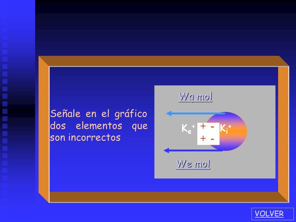 Ke+Ke+ Ki+Ki+ - + + - + + We mol We mol Wq mol Wq mol Señale en el gráfico dos elementos que son incorrectos VOLVER