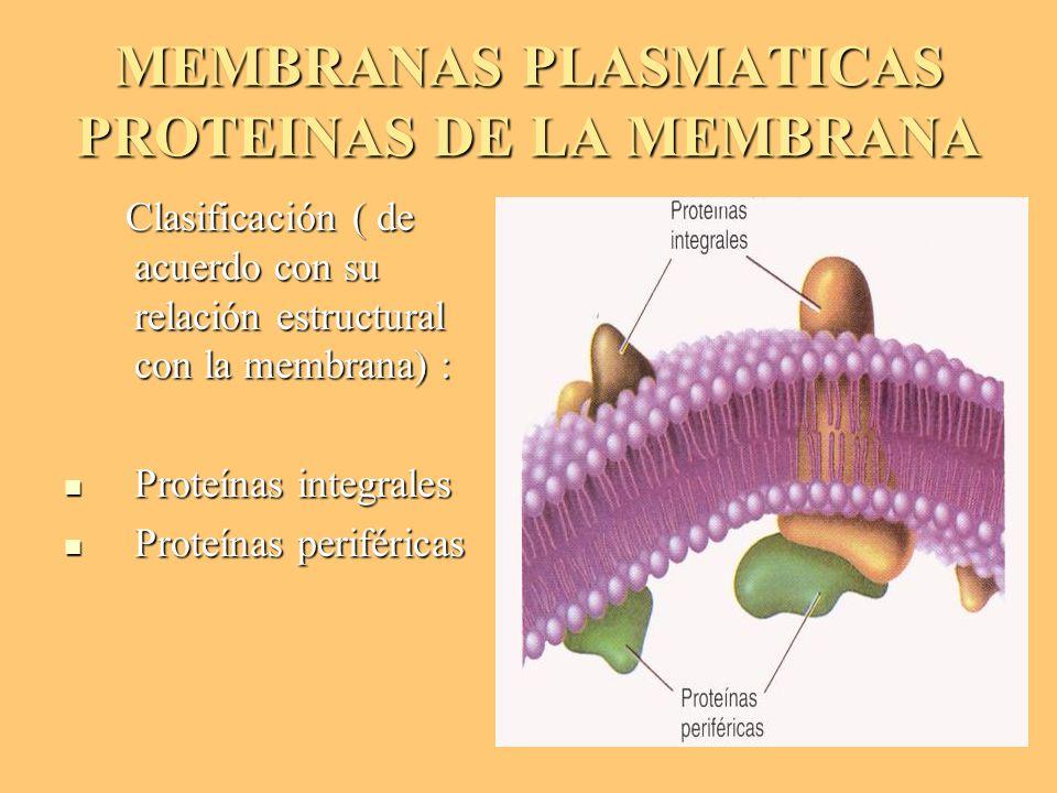 MEMBRANAS PLASMATICAS PROTEINAS DE LA MEMBRANA Clasificación ( de acuerdo con su relación estructural con la membrana) : Clasificación ( de acuerdo co